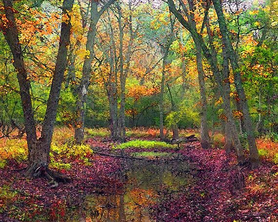 Autumn Landscape Fall Landscape Forest Water Pond by ImagineStudio, $35.00