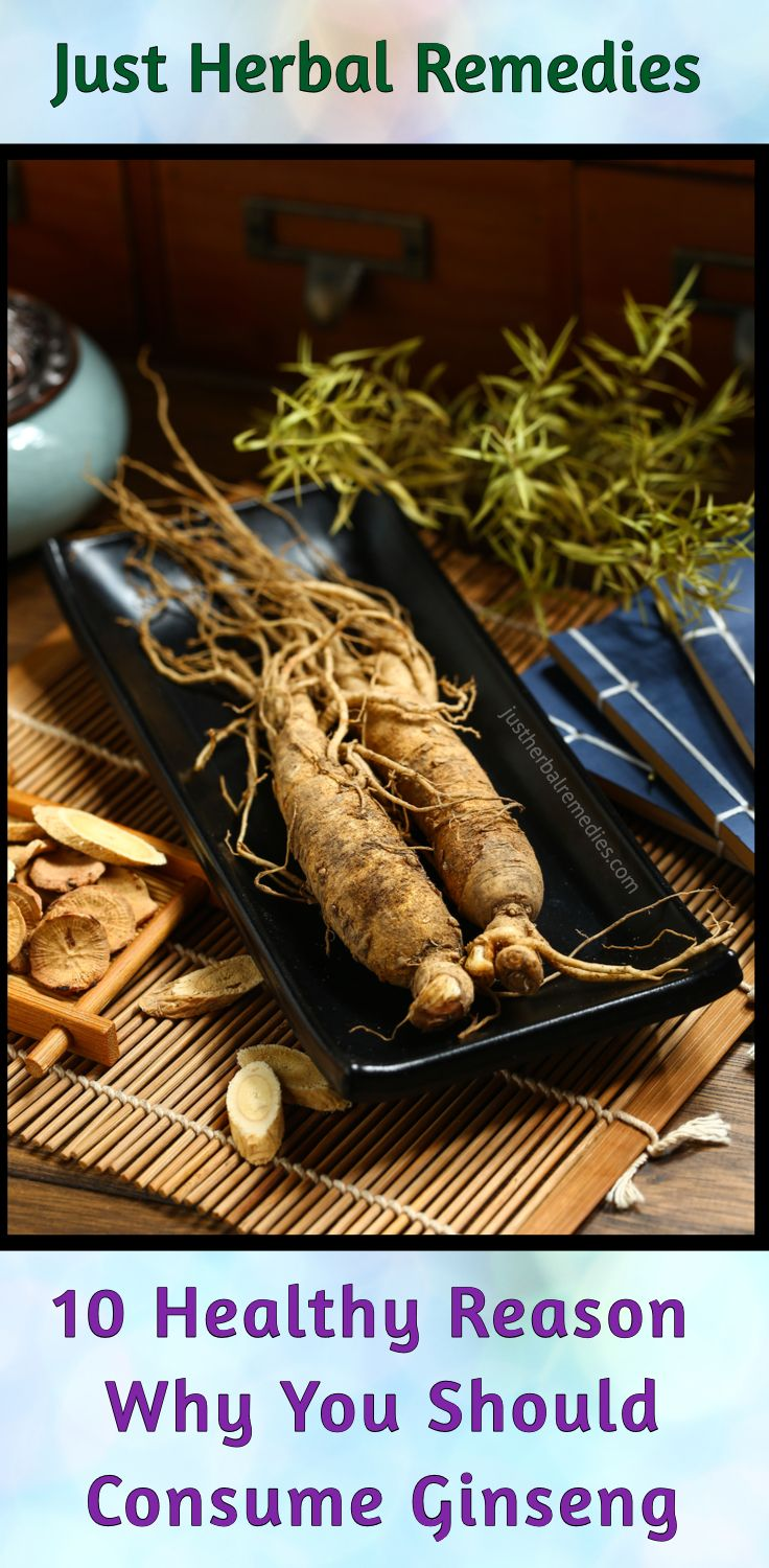 they are slow growing with fleshy roots the herb is mostly found in cooler climates ginseng is an herb which has several health benefits
