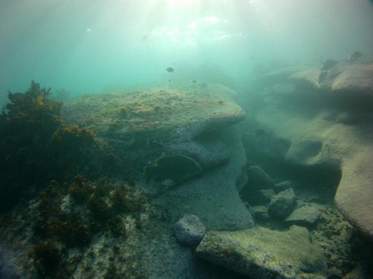 Underwater world at clovelly beach sydney
