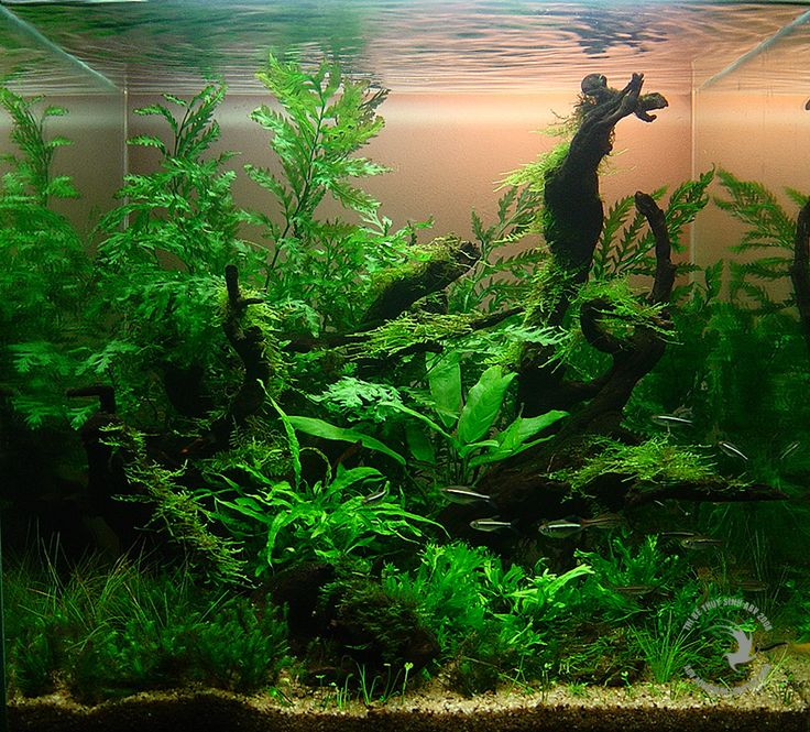Olá pessoal, hoje trago aqui uma pequena coletânea de layouts de aquários plantados para agregar mais ainda aos arquivos do blog. A parte de...