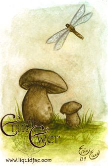 mushroomBoletus Mushrooms, Mushrooms Study, Mushrooms 3X4 5