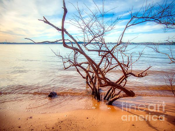 Impressive Lake Norman Driftwood Available As Wall Art Or Home Decor Items With A 30 Day Money Back Guarantee Www Amy Fine Art America Metal Prints Fine Art