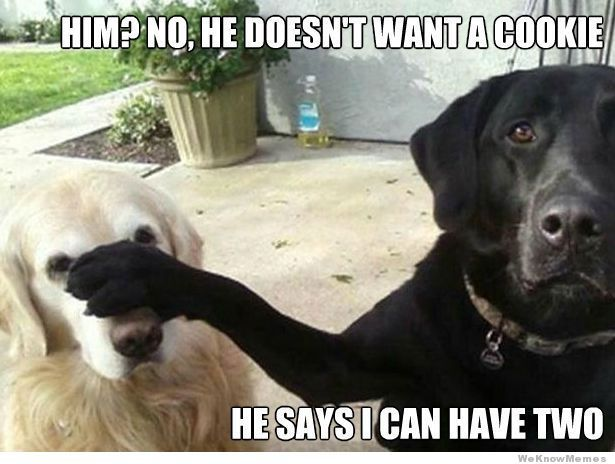Him?  He doesn't want a cookie...he says I can have two......scumbag lab lol