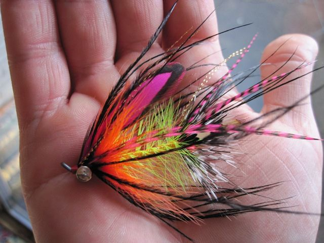 Rob Russel's fire tiger kingtruder-- inspiring fly!