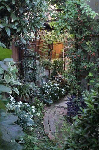 小さな庭でバラと遊びながら、日々の風景や花の美しさに 小さな幸せを見つめています。オールドローズとリーフ類が、メインの庭