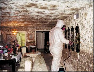 Image result for Why a Mold Remediation Company is the Obvious Better Choice