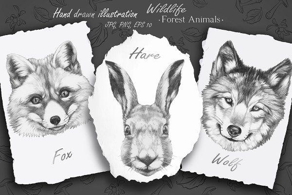 Wildlife / Forest Animals - Illustrations