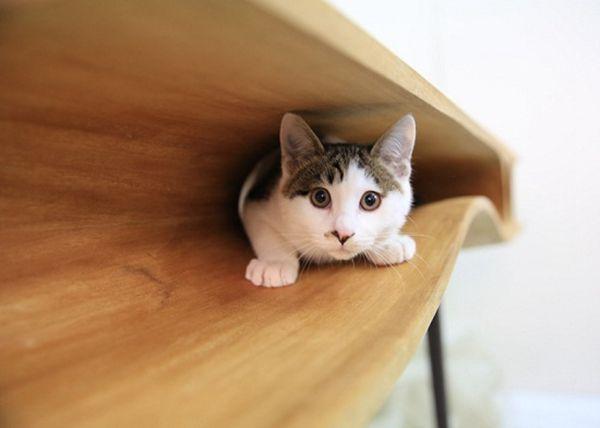 """专为爱猫人士设计 """"孔洞""""宠物猫桌工作嬉戏两不误_家具_家居_荔新闻_广东广播电视台"""