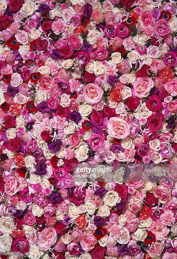 A large backdrop of different flowers (XXXL Size).