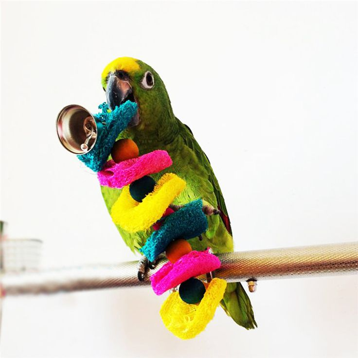 2015 Hot Sale Bird Toys Parrot Cage Toys Cages Cockatoo Conure Loofah Sponge Bite-Resistant Handmade Parrot Toys // FREE Shipping //     Buy one here---> https://thepetscastle.com/2015-hot-sale-bird-toys-parrot-cage-toys-cages-cockatoo-conure-loofah-sponge-bite-resistant-handmade-parrot-toys/    #catoftheday #kittens #ilovemycat #lovedogs #pup