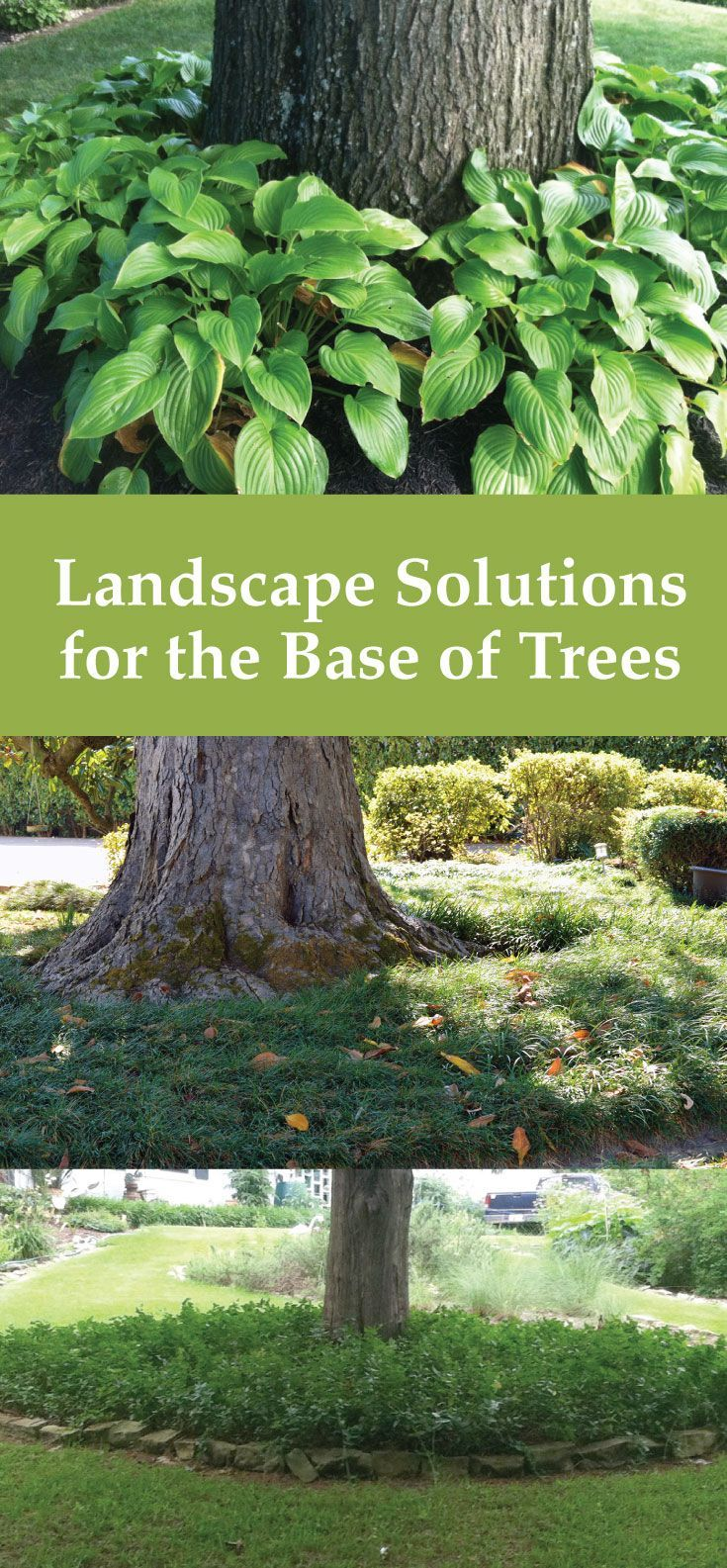 Ideas for Landscaping Around Trees -- Landscaping solutions for the base of trees. Reduce weed-eating by planting around trees. Some of my favorite ideas for plants and styles. via @gardenexperimnt