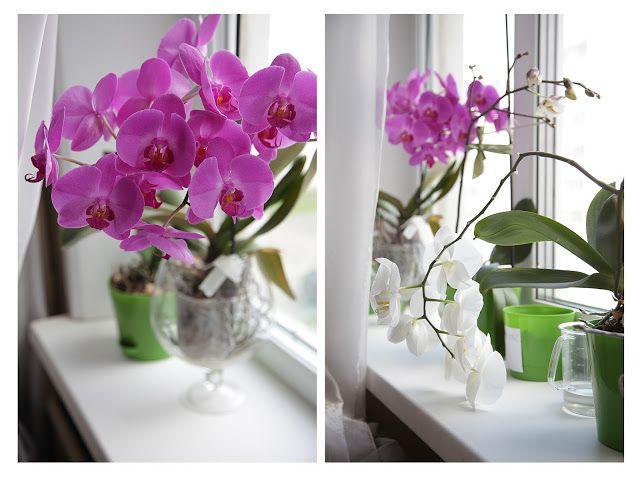 Toys+things: Орхидеи и всякие детские штуки