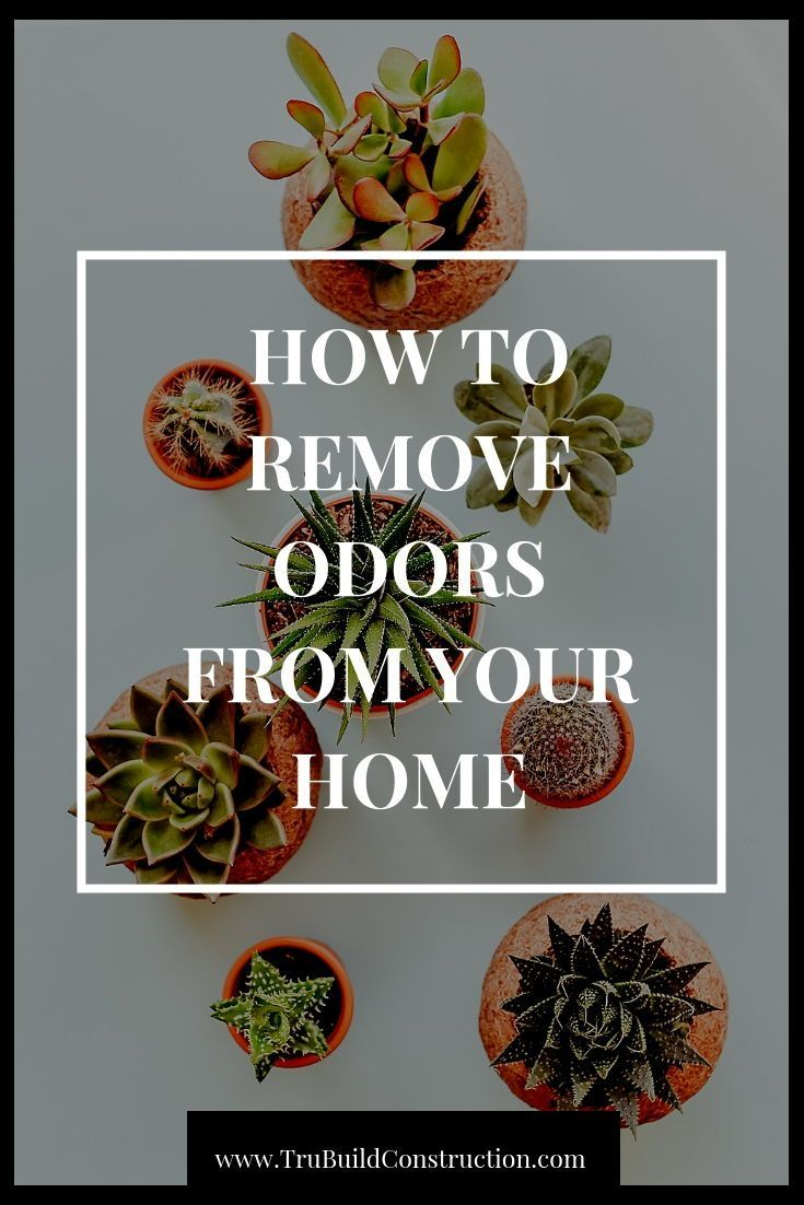 Looking for ways to remove common odors like smoke fish or curry pet smells and mold from your home? Keep your home smelling sweet with these tips!