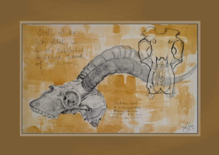Liza Visser#Coffee stained, and charcoal buck drawing