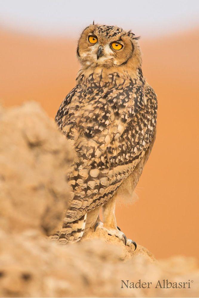 Pharaoh Eagle Owl by Nader Albasri on 500px