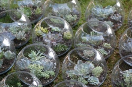 How to make your own succulent terrarium centerpieces | Offbeat Bride [g> well in advance, add hanger flower white]
