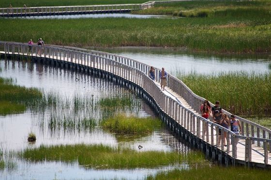 Visitors enjoy the boardwalk on the trail to the dunes at PEI National Park, Greenwich. by gary71