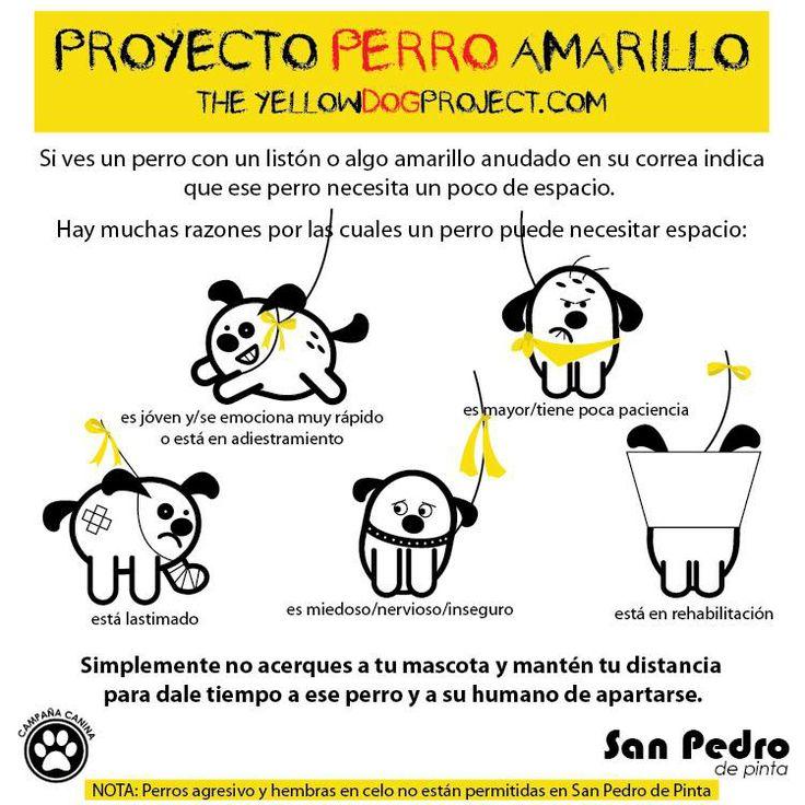 Proyecto Perro Amarillo es una campaña que   busca hacer conciencia que hay perros que necesitan su espacio. The yellow dog proyect