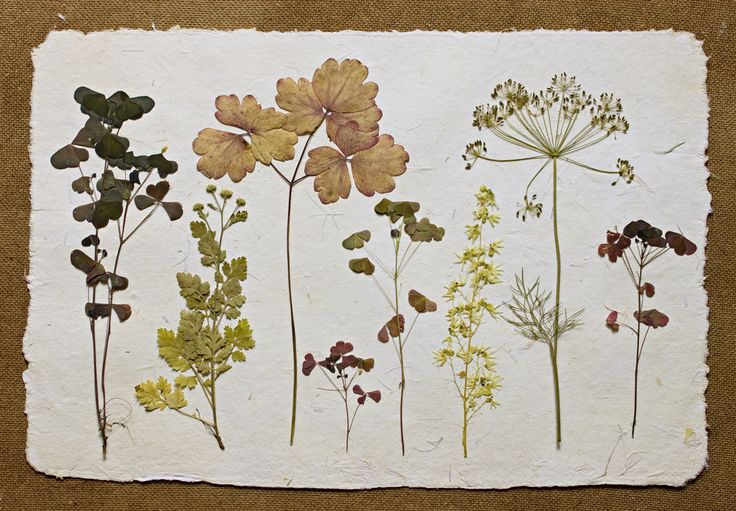 Картинки по запросу миниатюры аппликации из сухих цветов открытки