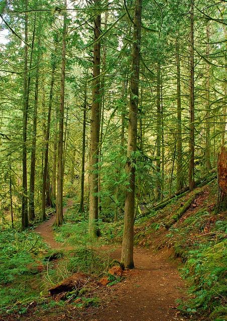 first day of spring, Goldstream Provincial Park, Vancouver Island, British Columbia, Canada. Photo: Ireena Eleonora Worthy, via Flickr