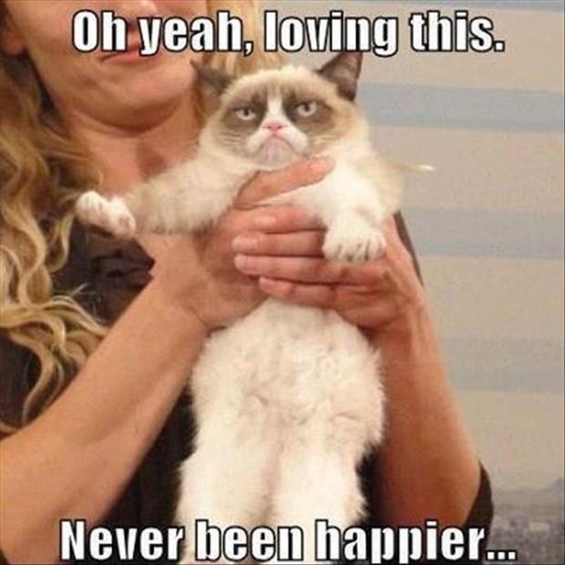 i love tard the grumpy cat