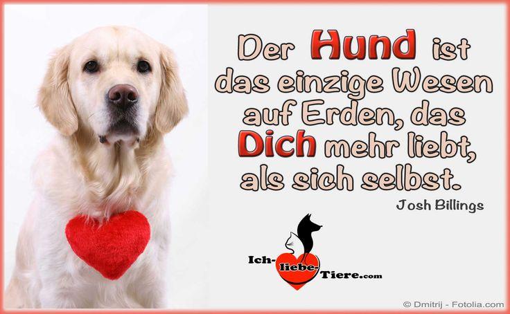 Der Hund ist das einzige Lebewesen auf der Erde, das Sie mehr liebt, als sich selbst. >> http://www.ich-liebe-tiere.com/ <<