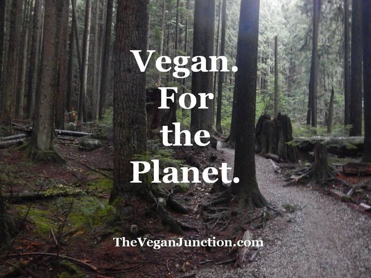 17 Best Images About Animal Agriculture Amp Climate Change