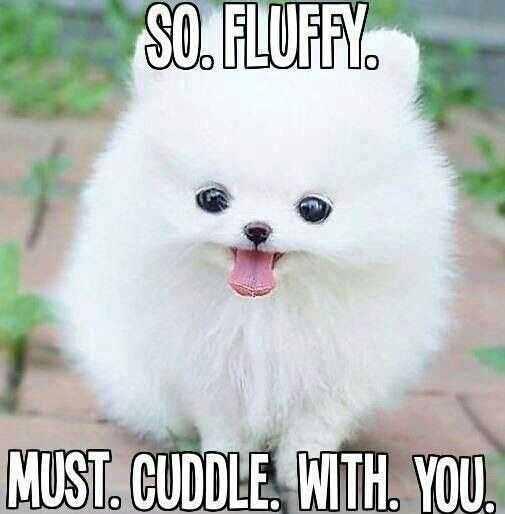 I Want To Cuddle With You Baby: 69 Best Memes Images On Pinterest