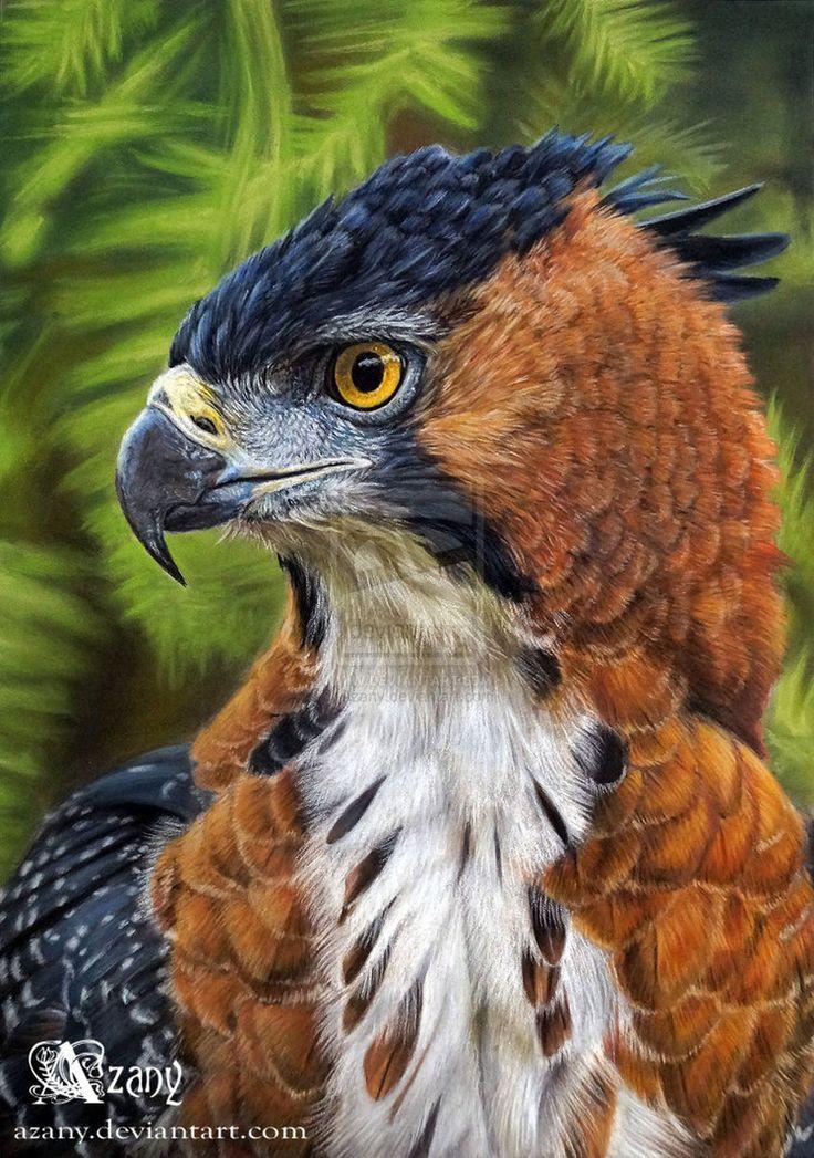 Mejores 51 imágenes de EAGLES en Pinterest | Aves rapaces, Águilas y ...