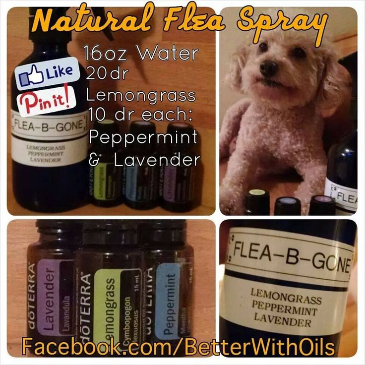 Flea Spray - You can purchase oils at http://mydoterra.com/angelhull