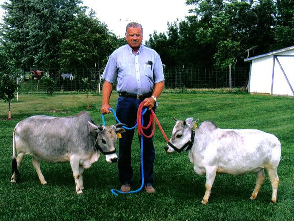 There are miniature zebu out there in the world as well, in case you were wondering.
