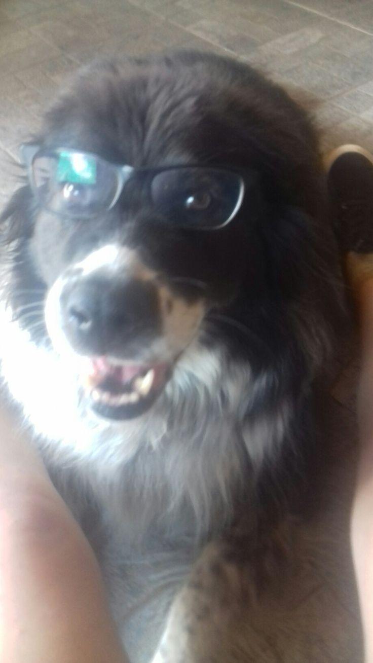 Funny Dog 😂😄