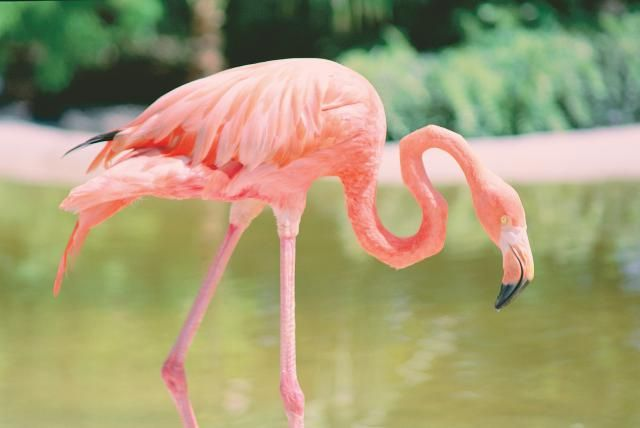Try These 10 Things in Fort Lauderdale, Florida: Flamingo Gardens