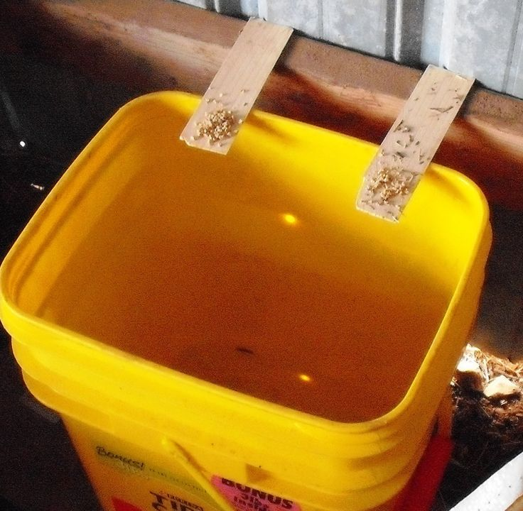 walk the plank bucket mouse trap
