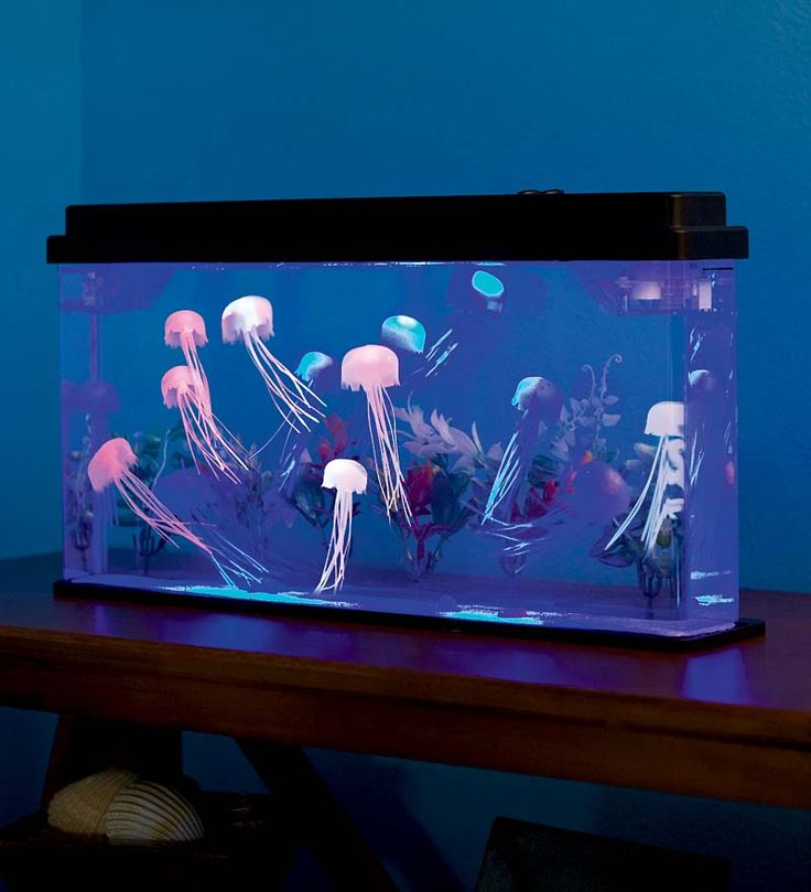 Giant Jellyfish Aquarium with Color-Changing LED Lights. Looks cool, kids will get an aquarium, and I won't have to deal with dead fish.