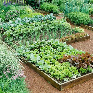 Here's a hint: Build raised beds on existing lawn by lining the bottom of frames with several layers of newspaper, then filling with soil. That way, you don't have to dig!