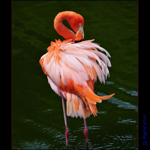76 best images about flamingo 39 s on pinterest for Flamingo feather paint