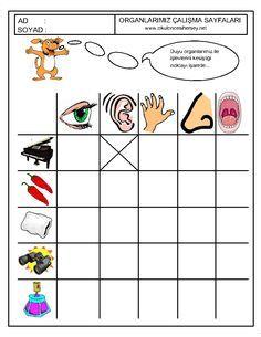 anasınıfı duyu organlarıyla ilgili çalışma sayfaları (4)