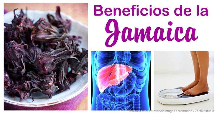La planta de jamaica no solo es famosa por sus hermosas flores, sino también por sus beneficios de salud que han sido utilizados desde los tiempos antiguos. http://articulos.mercola.com/sitios/articulos/archivo/2015/09/13/beneficios-del-te-de-jamaica.aspx