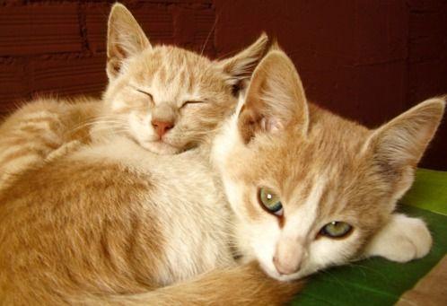 Snuggling Cats   @FairMail - Fair Trade Cards  - FDP6415