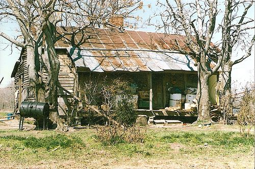 Old shack in the middle of a cotton plantation in the Mississippi Delta