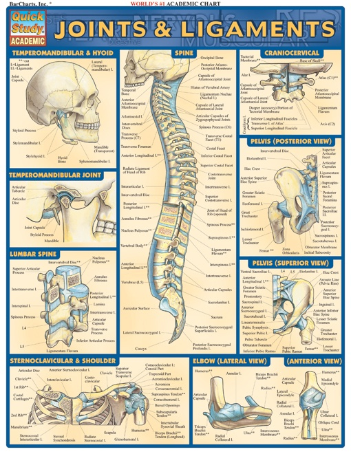 40 best Anatomy physiology images on Pinterest | Human body, The ...