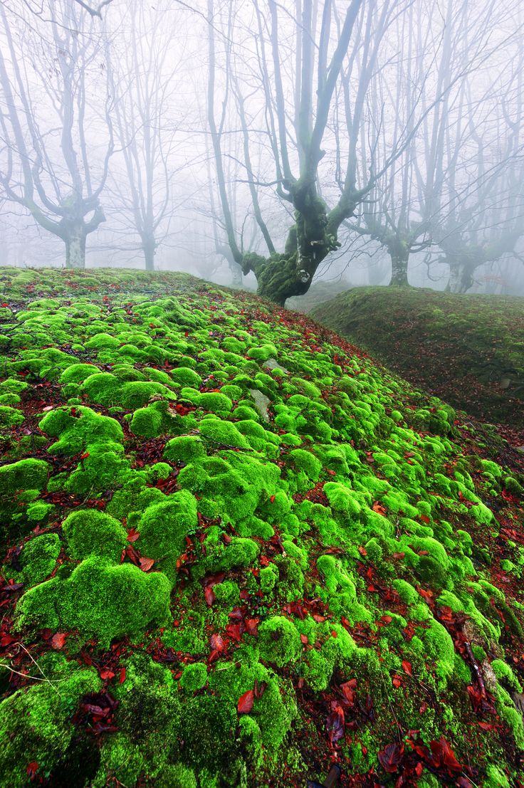 magic forest with moss bubbles by Mikel Martinez de Osaba on 500px