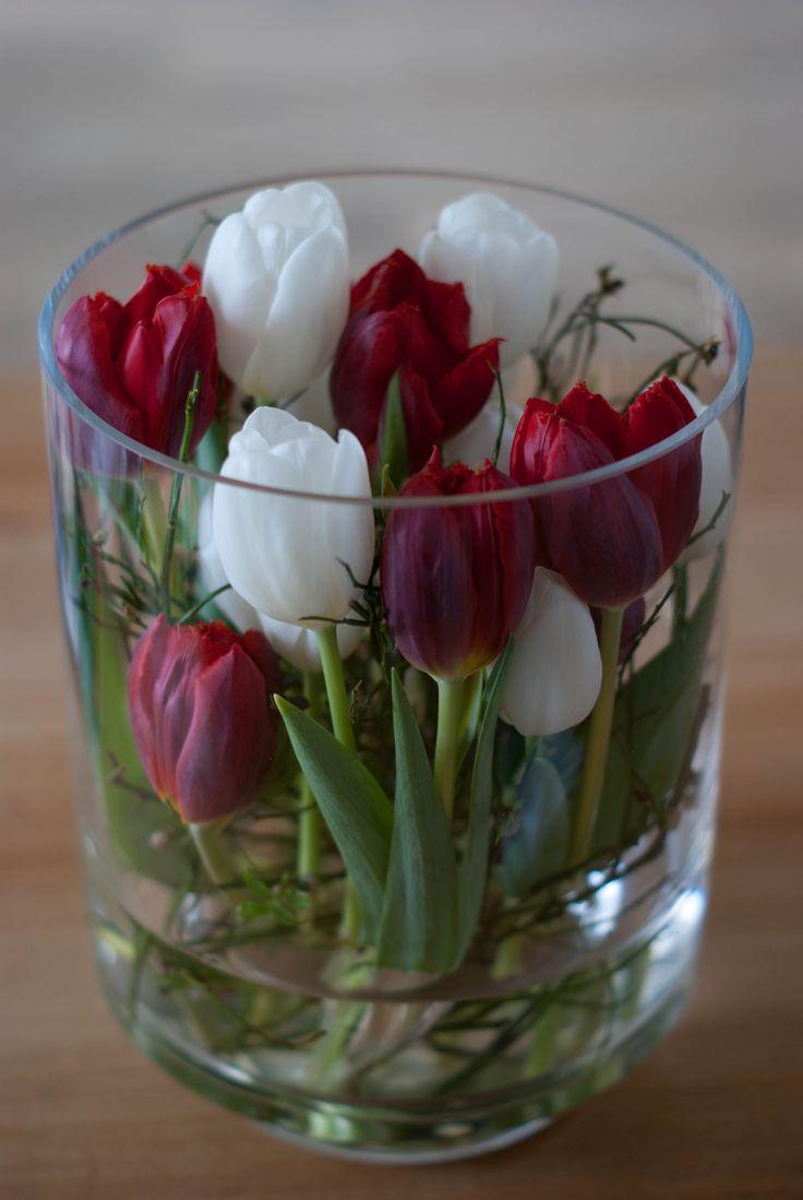 Tulpen © ItH