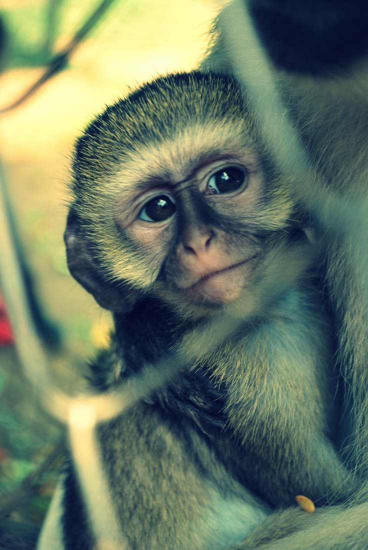 Photo taken at the Vervet Monkey Foundation just outside Tzaneen