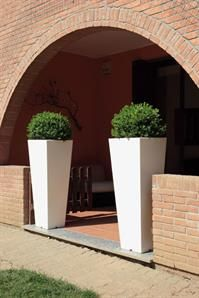 Tall pots in an entrance makes for a stunning first impression.