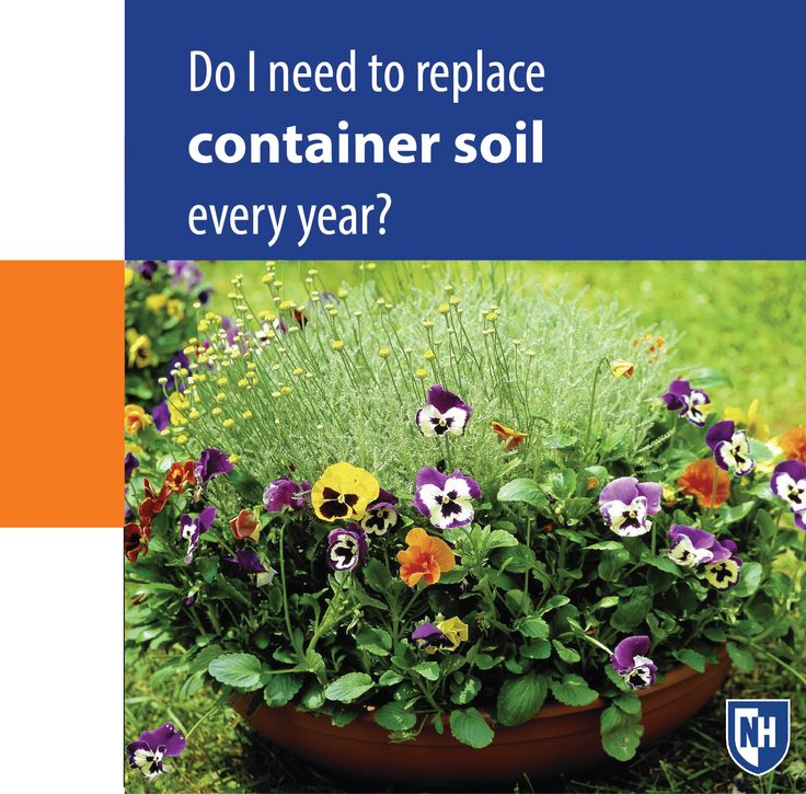 Do i need to replace container soil every year unhext for Soil 2 year pgdm