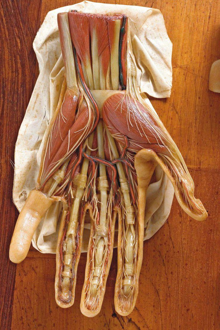 323 best estudios de la mano / hand studies images on ...