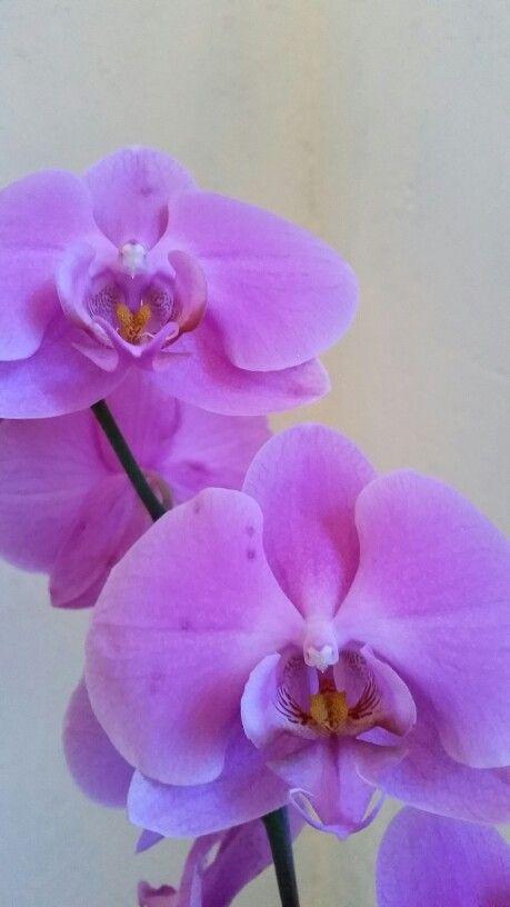 Orquídeas. 2015. Belén.
