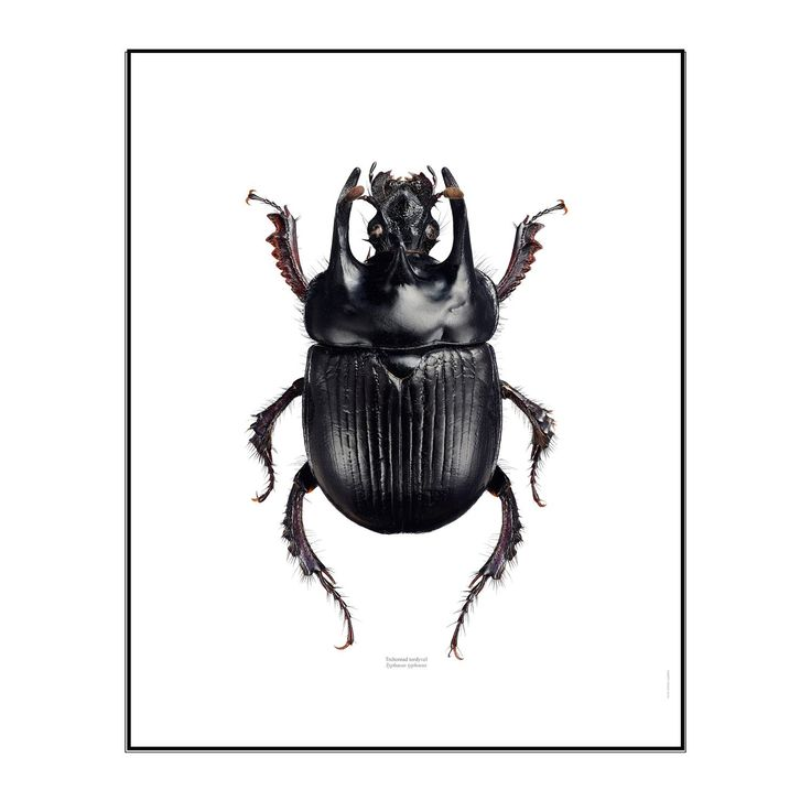 Typhaeus poster designet av Göran Liljeberg. . I starten kan denne posteren se skremmende ut, m...